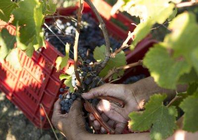 117_Harvest_CdB478627